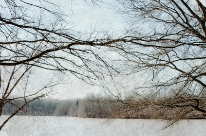 This picture didn't turn out, so I blew out exposure and gave it what I think is a nice wintry look.
