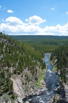 Gibbon-River-flowing-into-vast-wilderness