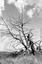 Harsh-on-trees-up-top-bw