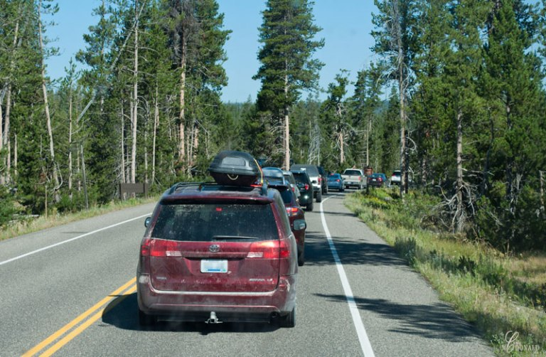 Line-of-traffic-waiting-to-enter-Yellowstone's-south-entrance