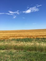 Road-to-Gering-wheat