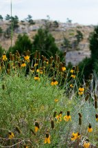 Yellow-wildflowers