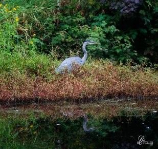 campground-egret-crop