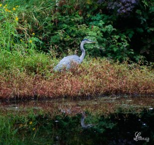 campground-egret-crop