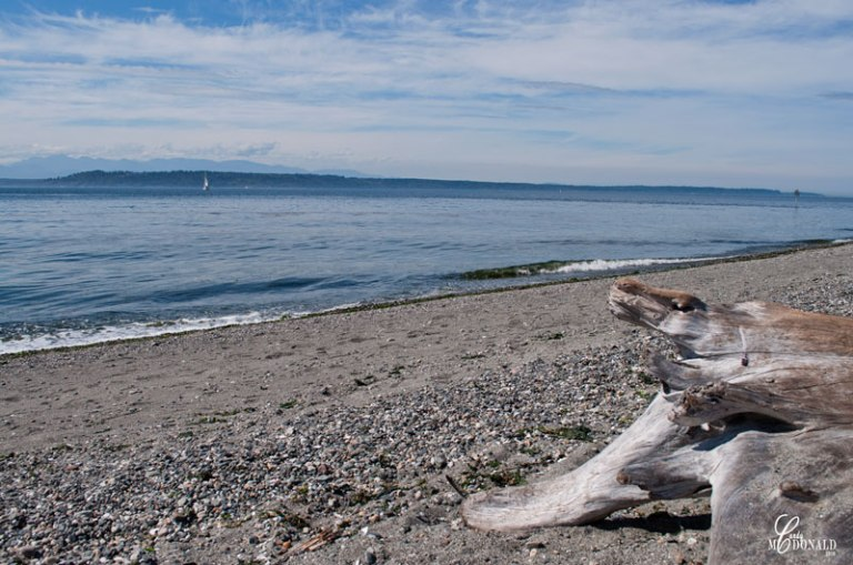 driftwood-on-edmonds-beach