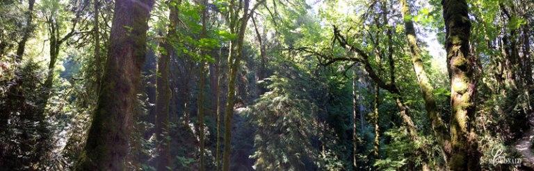 woods-pano