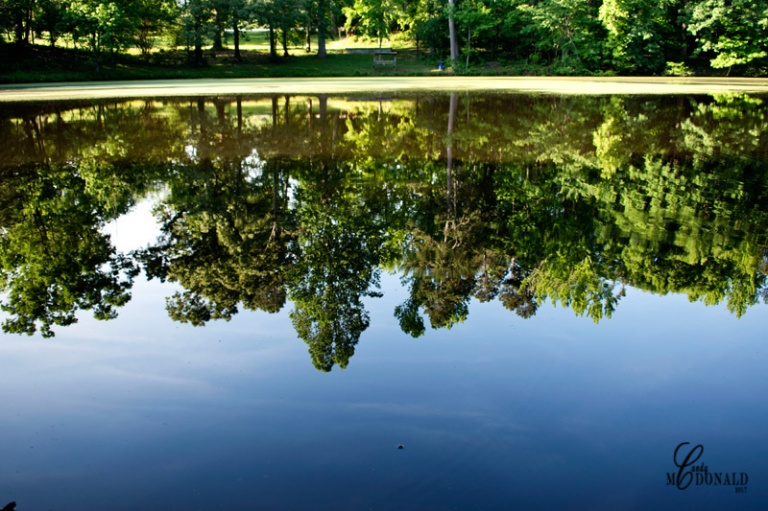Reflections 7