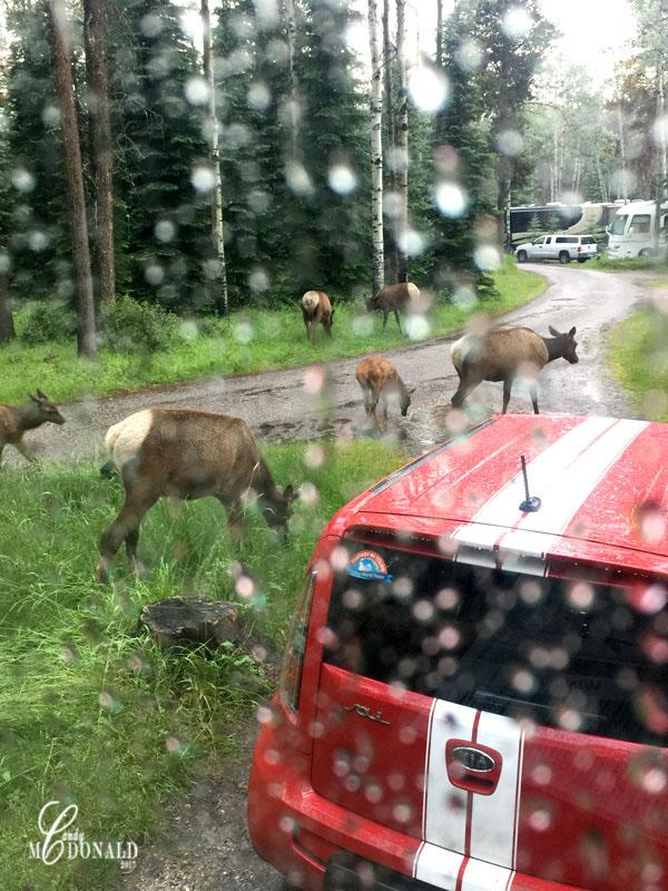Elk-web