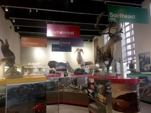 Animal display