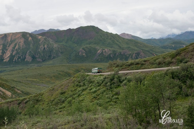 Tundra tour DSC_0128