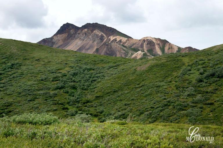 Tundra tour DSC_0195