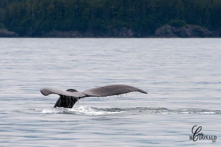 Whale DSC_0284