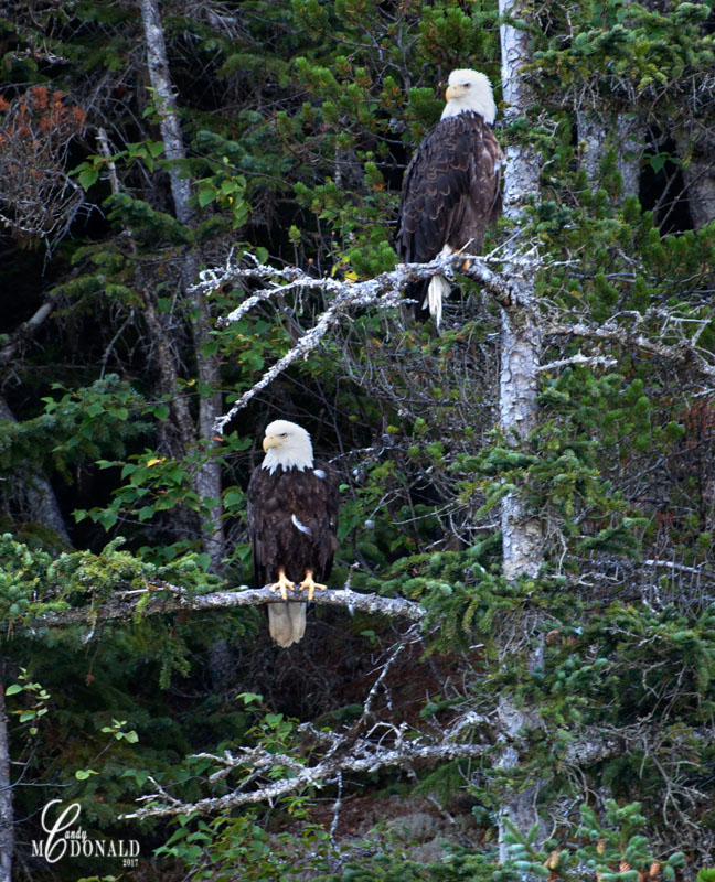 Eagles 8x10 crop DSC_0071