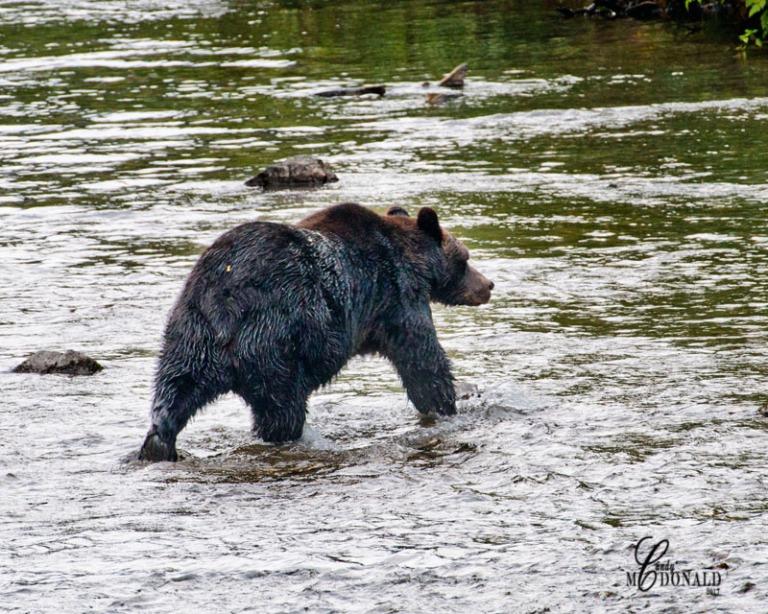 Grizzly 8x10 DSC_0083