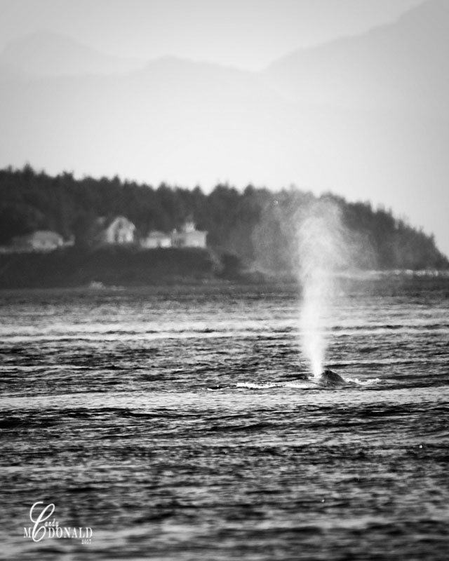 Whale 8x10 crop bw DSC_0305