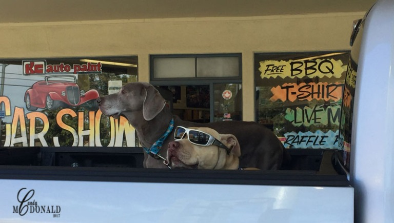 Dog-with-sunglasses-IMG_6569
