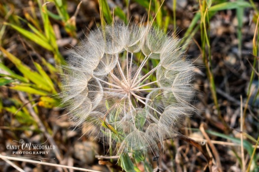 Flora DSC_0048
