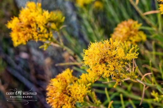 Flora DSC_0061