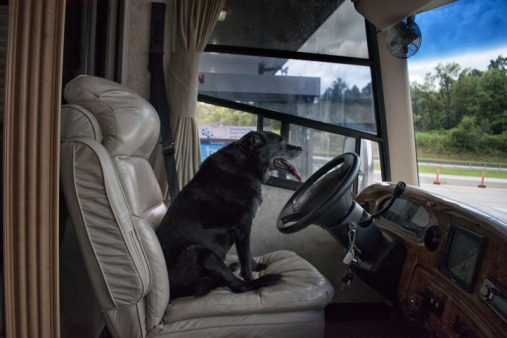 Black dog sitting in driver's seat at gas station