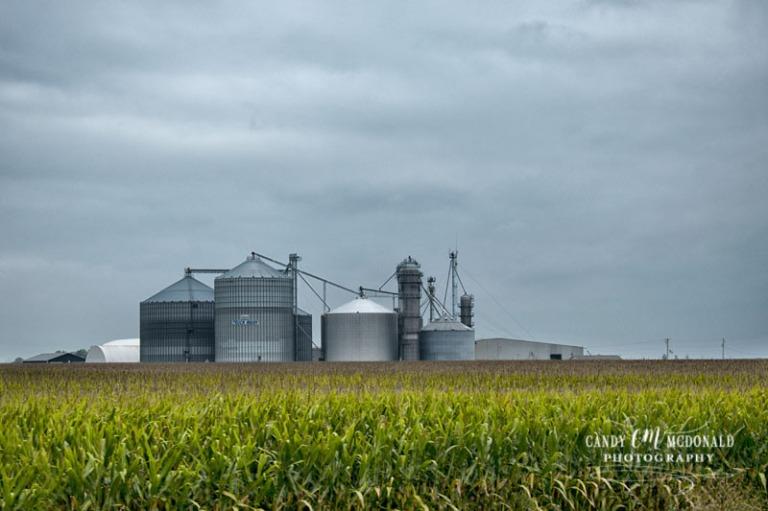 Silo in cornfield DSC_0016