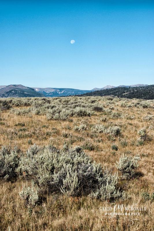 Yellowstone DSC_0016