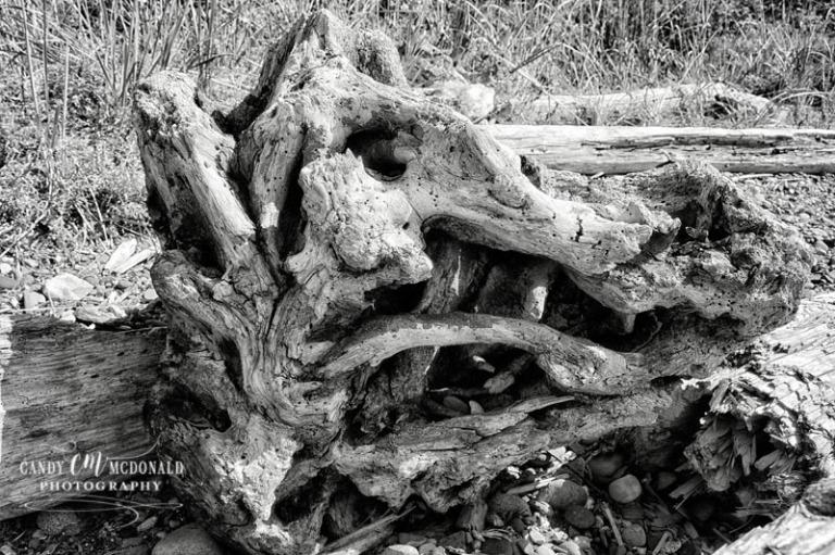 Driftwood bw DSC_0009