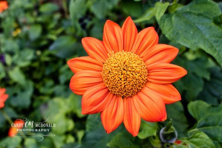 Flower DSC_0012