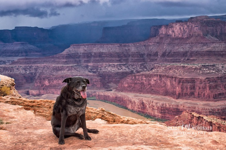 Sadie at Dead Horse Point DSC_0032