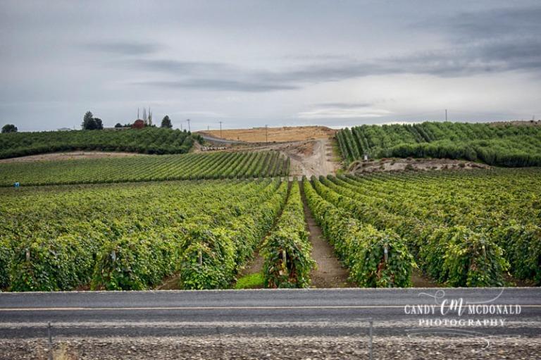 Vineyard hdr DSC_0014