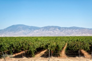 Vineyards in the Central Valley region of California