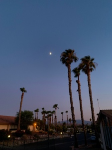 Moonrise over the palms at Caliente Springs RV Resort in Desert Hot Springs, CA