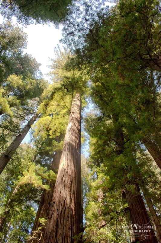 Redwood DSC_0041