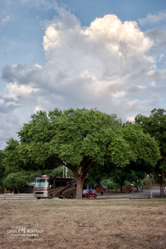 An RV camped under the canopy of a large pecan tree in Junction, TX
