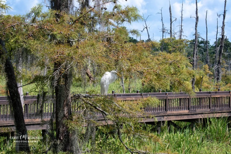 Texas Welcome Center Egret DSC_0017